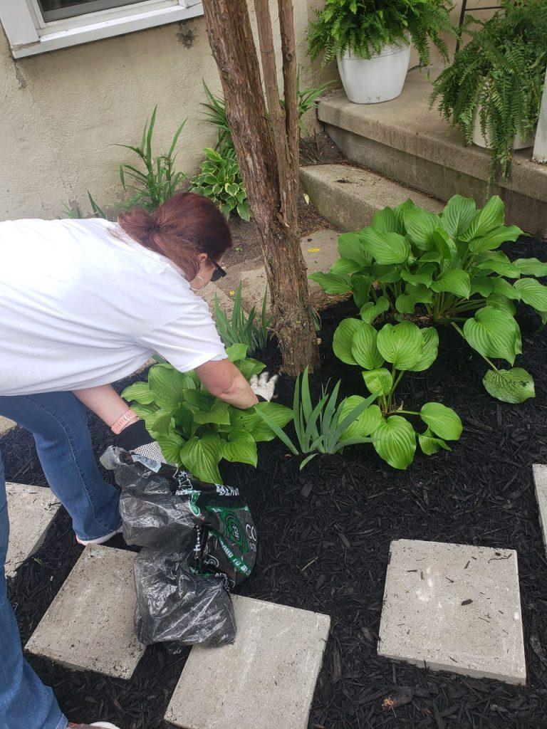 EE Ward employee planting in a garden